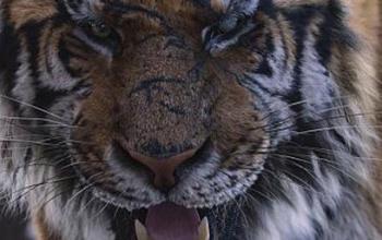 Il Far East Film Festival sotto il segno della tigre