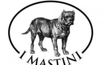 Arrivano i Mastini