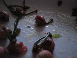 Foto di Mauro Smocovich. possono sembrare boccioli di rosa, coi loro gambi, buttati su un pavimento lucido e bagnato dalla pioggia e  invece sono noccioli di ciliega in un piatto con macchie d'olio d'insalata...