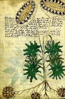Illustrazione dal Manoscritto di Voynich