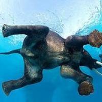 L'Elefante ride